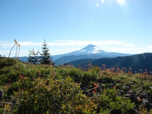 Mt. Hood from the bench meadow