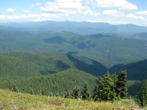 Mt. Adams and the Trapper Creek Wilderness from Observation Peak