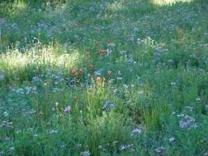 Paint & aster meadow
