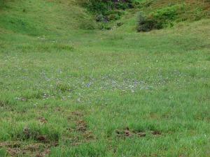 Aster field in Wy'East Basin