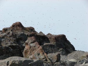 Flying ants filling the sky and covering the rocks on Coldwater Peak