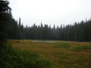 Cache Meadow