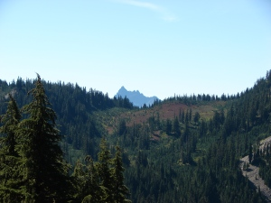 Three Fingered Jack from the PCT