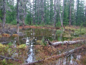 One of the many swollen ponds along the Potato Butte Trail