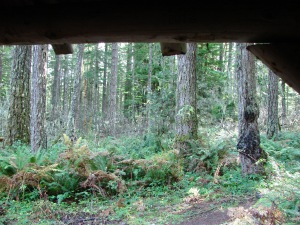 View from the Ash Swale Shelter